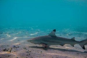 Reisen+–+Malediven+-+Holiday+Island